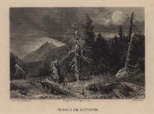 Schlesien. Eine Schilderung des Schlesierlandes: Urwald am Altwater