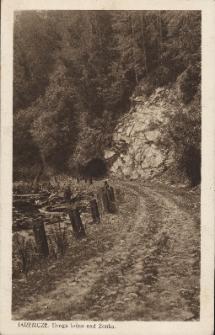 Jaremcze : droga leśna nad Żonką